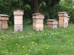 Bienen – Leben – Wissen